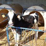 #BlogTripFamiliesVallesOriental: Aula d'entorn rural Can Turró