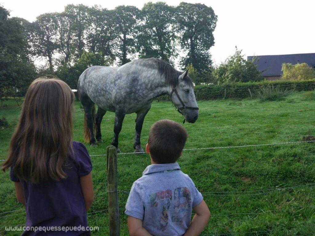 Los peques mirando un caballo