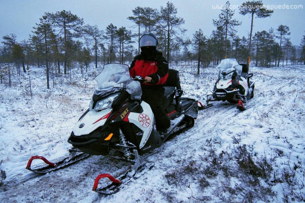 Un adulto subido en una moto de nieve, en un paisaje boscoso