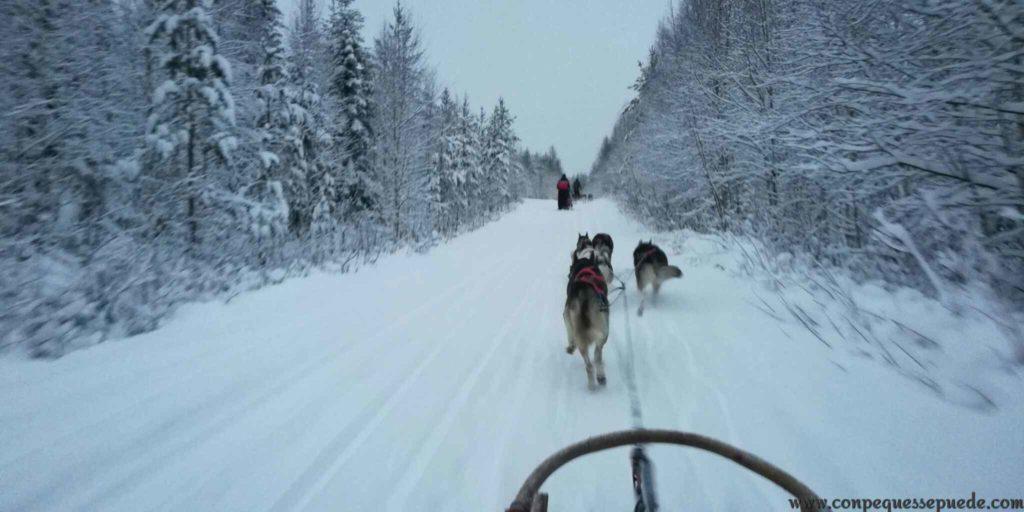 Recorriendo los bosques nevados con un trineo de huskies